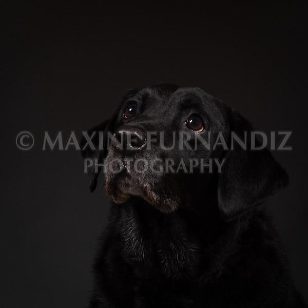 Dogs-7383-Edit
