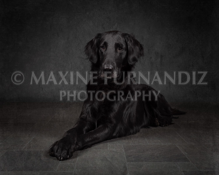 Dogs-7337-Edit