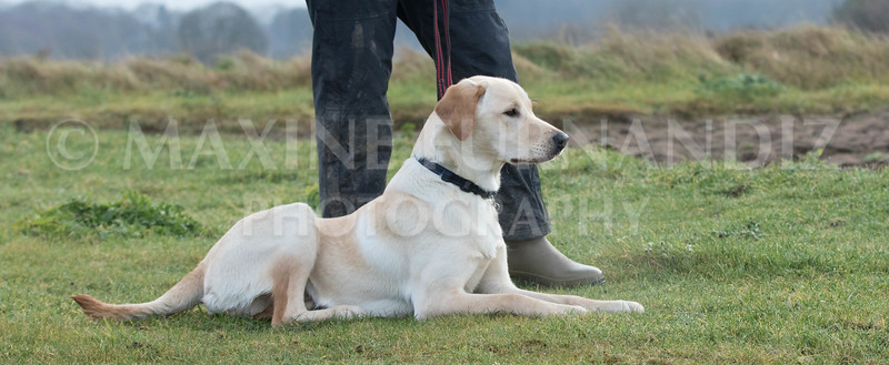 5 Jan DW Gundog-2481-Edit