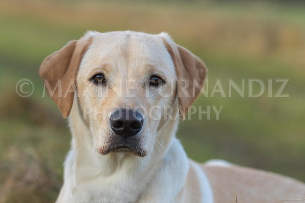 5 Jan DW Gundog-2273-Edit
