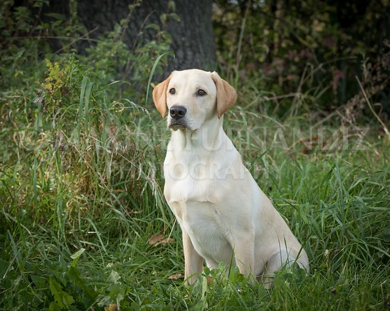 Yorkshire Gundog NoviceFT 6 Oct 2017-0672-Edit