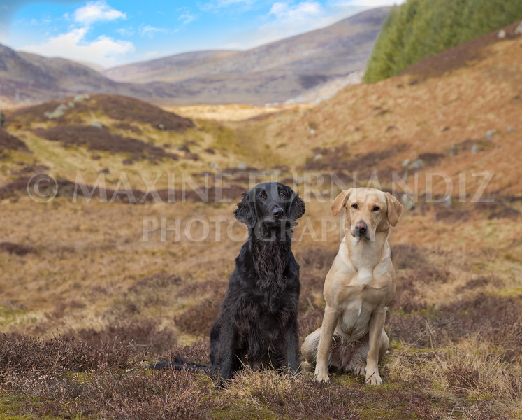 Training in Scotland Skye and Ailsa 2017