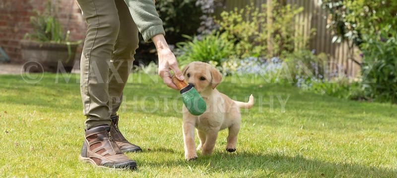 Puppy Shoot 11 May 2021-1794