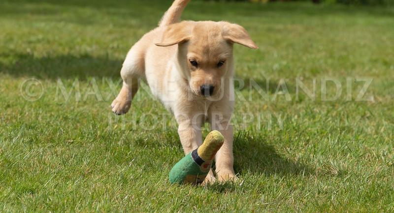 Puppy Shoot 11 May 2021-1797