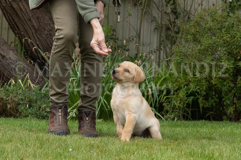 Puppy Shoot 11 May 2021-1746