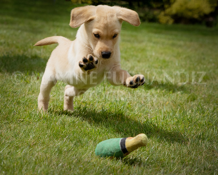 Puppy Shoot 11 May 2021-1796