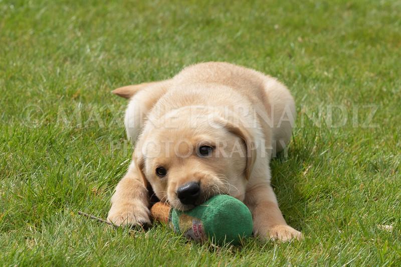 Puppy Shoot 11 May 2021-1781