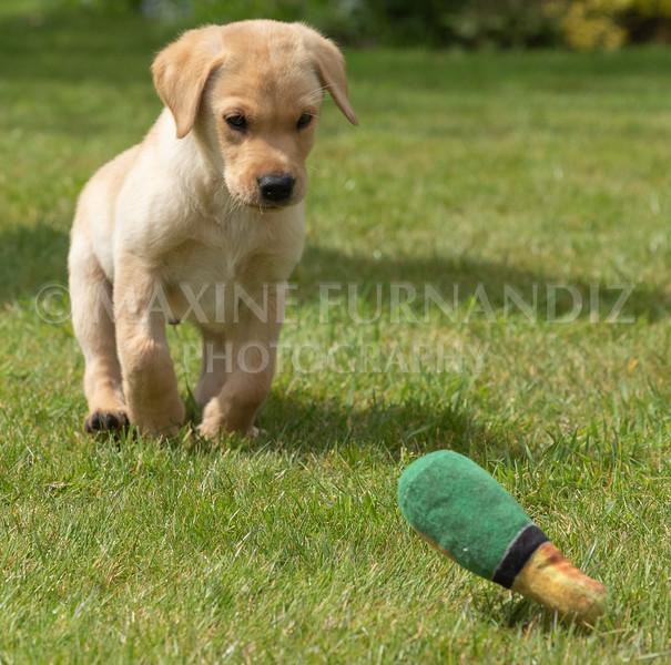 Puppy Shoot 11 May 2021-1795