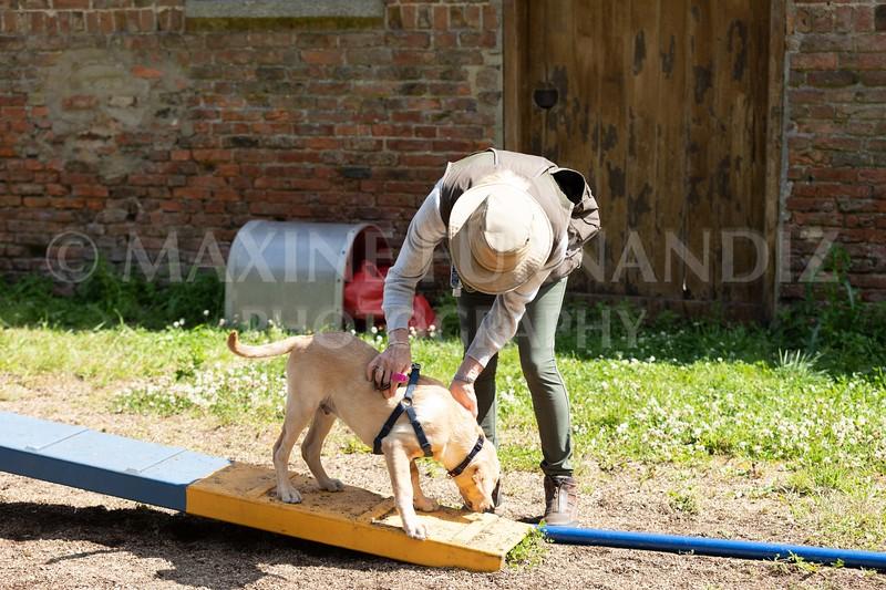 Puppy Agility 15 July 2021-8196