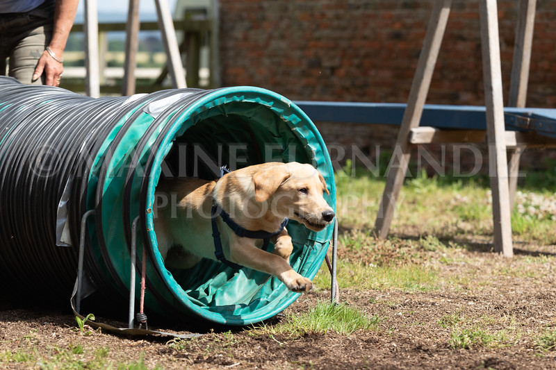 Puppy Agility 15 July 2021-8249