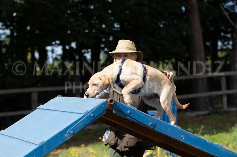 Puppy Agility 15 July 2021-8306
