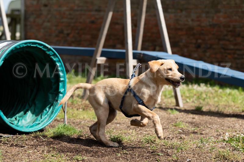 Puppy Agility 15 July 2021-8250