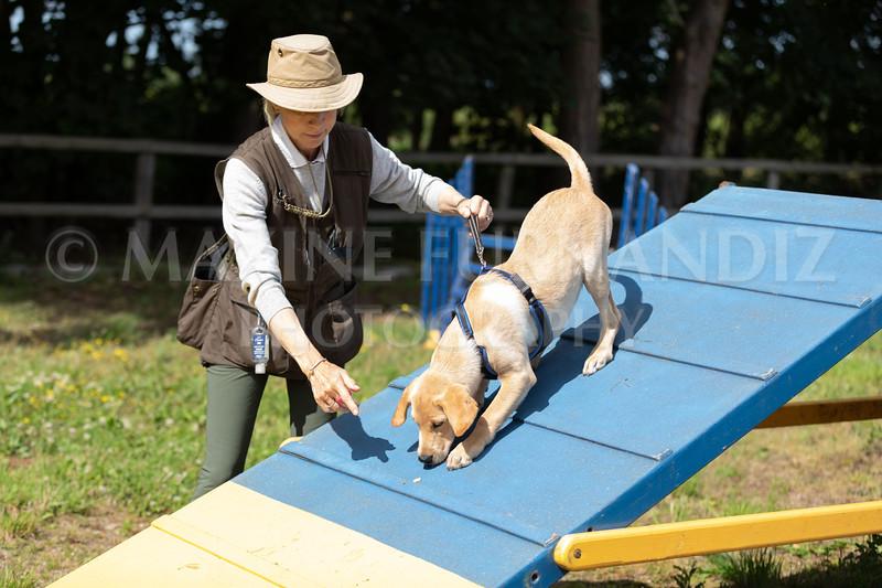 Puppy Agility 15 July 2021-8300