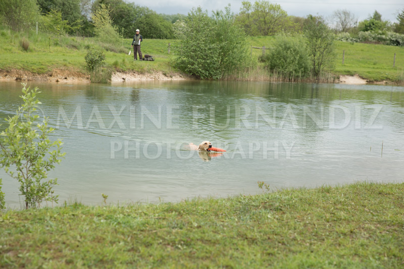Novice Gundog May 2017-4267