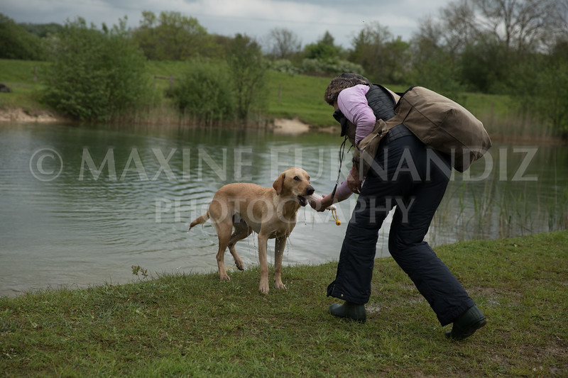 Novice Gundog May 2017-4284