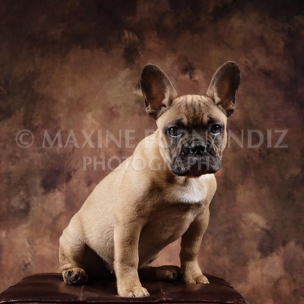 Claudia Piers Dogs-5526-Edit