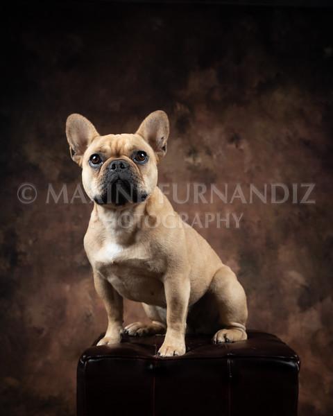 Claudia Piers Dogs-5537