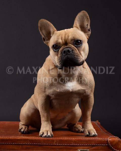 Claudia Piers Dogs-5560