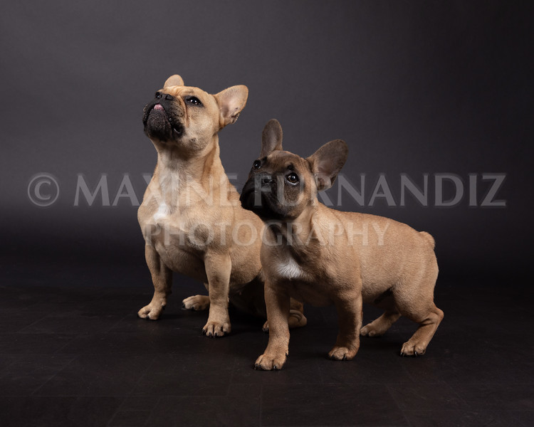 Claudia Piers Dogs-5551-Edit