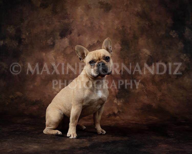 Claudia Piers Dogs-5494-Edit