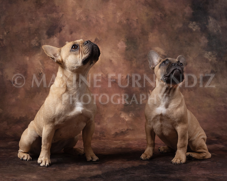Claudia Piers Dogs-5513-Edit