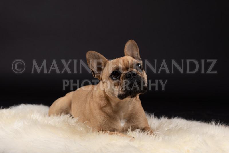 Claudia Piers Dogs-5574-Edit