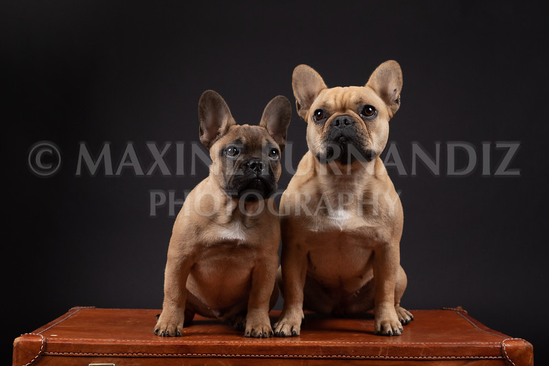 Claudia Piers Dogs-5564-Edit