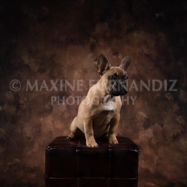 Claudia Piers Dogs-5524