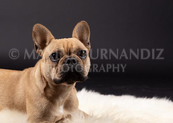 Claudia Piers Dogs-5584-Edit