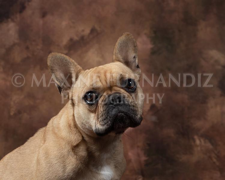 Claudia Piers Dogs-5496-Edit