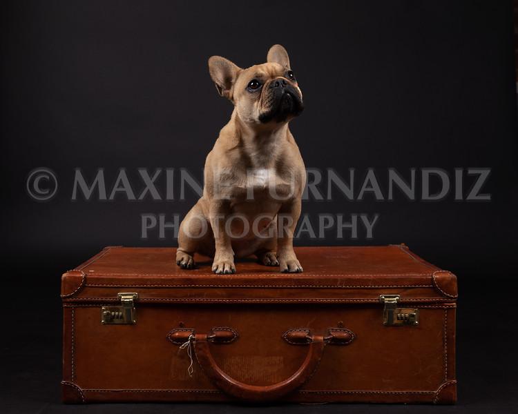 Claudia Piers Dogs-5562-Edit