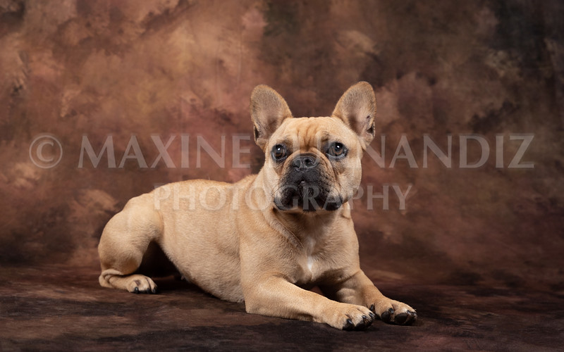 Claudia Piers Dogs-5510-Edit