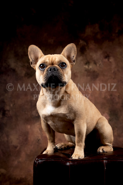 Claudia Piers Dogs-5537-Edit