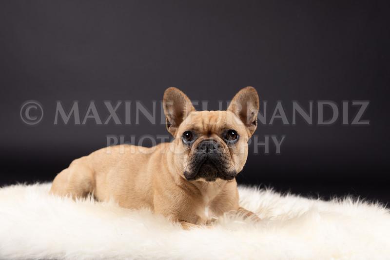 Claudia Piers Dogs-5578-Edit