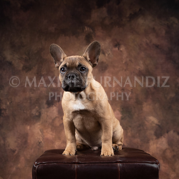 Claudia Piers Dogs-5527-Edit