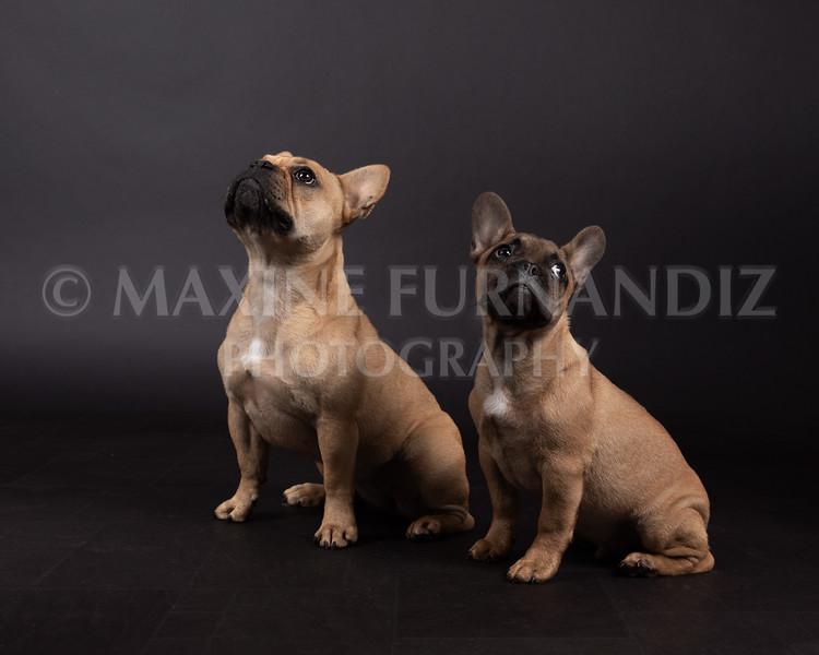 Claudia Piers Dogs-5550-Edit