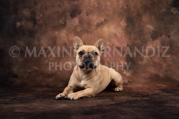 Claudia Piers Dogs-5503-Edit