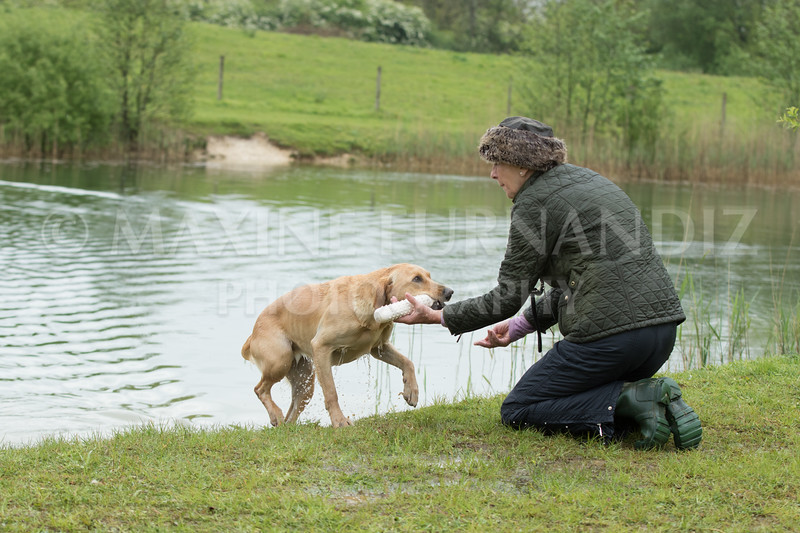 Novice Gundog May 2017-3241