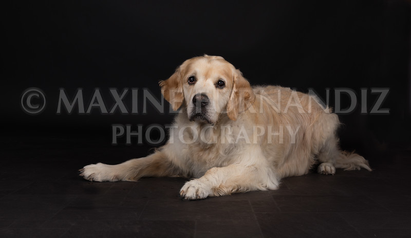 Dogs-2682-Edit