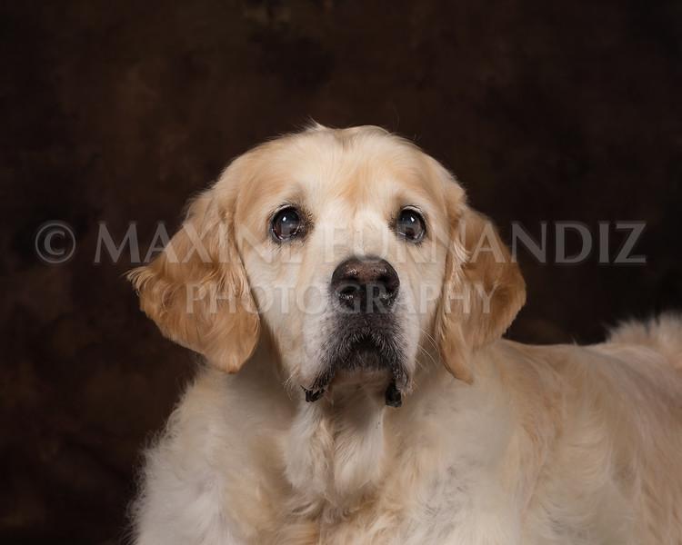 Dogs-2730-Edit