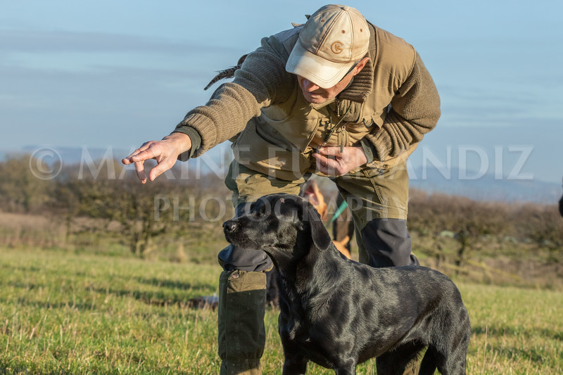 Dog Training-4248