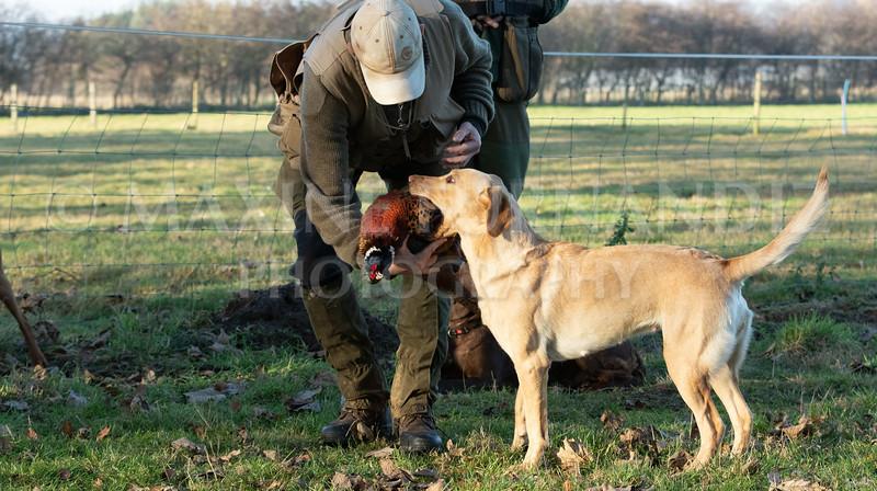 Dog Training-3953