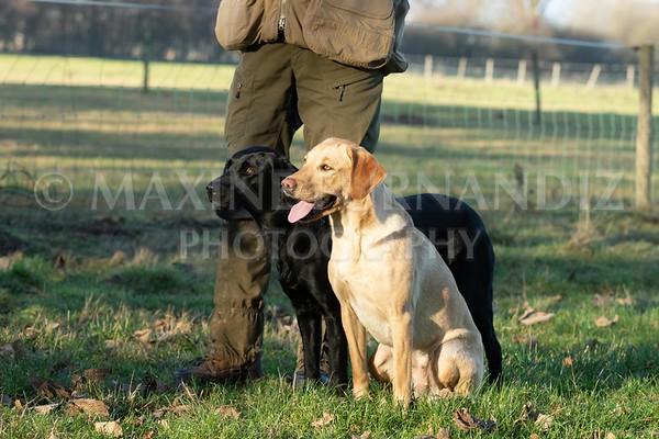 Dog Training-3908