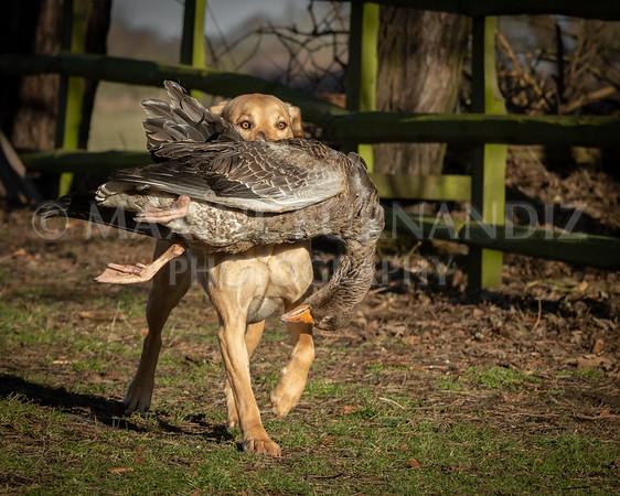 Dog Training £Feb 2019-4933