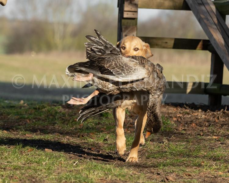 Dog Training £Feb 2019-4929