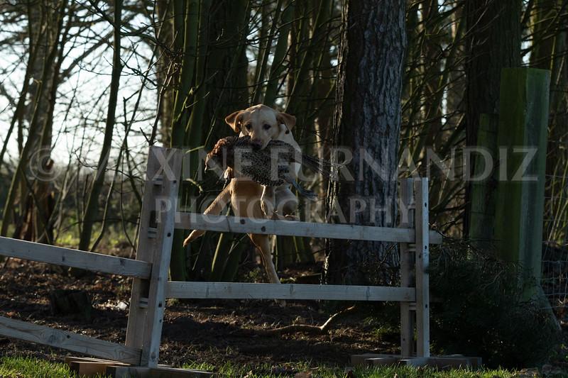 Dog Training-3966