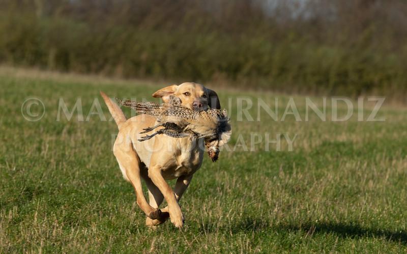 Dog Training-4213