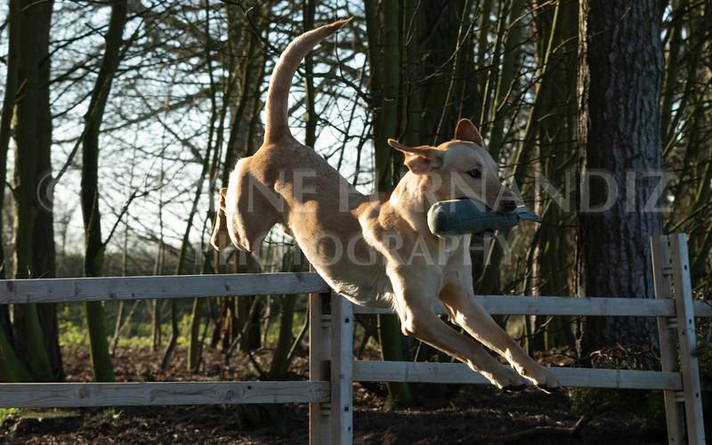 Dog Training-3886