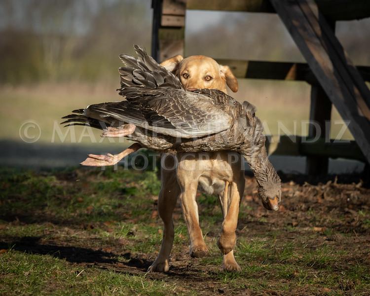 Dog Training £Feb 2019-4930