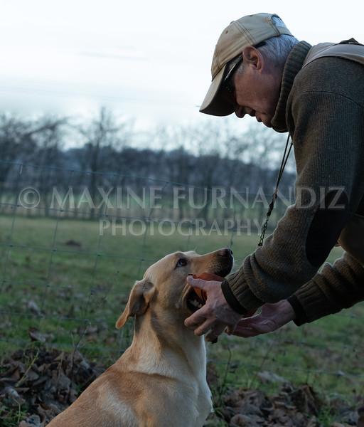 Dog Training-3857